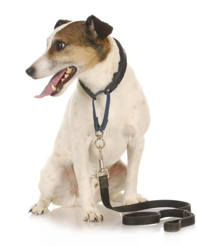 6 reasons to keep your dog on a leash