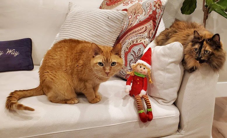 cat sitting, cat sitter, pet sitter