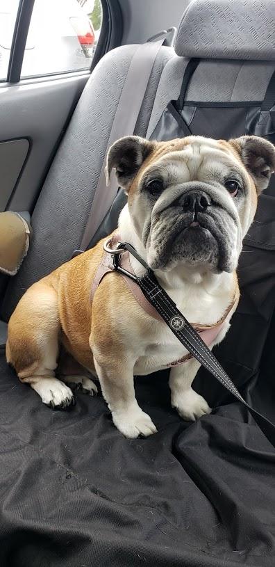 dog walker, dog sitter, pet sitter, dog walkers, pet sitters, dog lovers